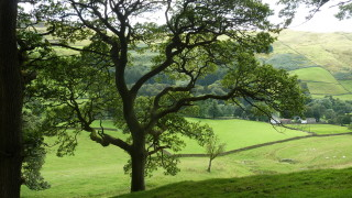 Tree in the Dales - Colleen Friesen